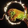 Цирки в Конышевке